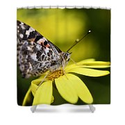 The Painted Lady And The Daisy  Shower Curtain