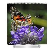 The Painted Lady Butterfly  Shower Curtain