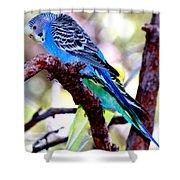 The Parakeet Shower Curtain