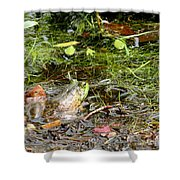 The Patient Frog Shower Curtain
