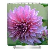 The Pink Dahlia-flower2 Shower Curtain