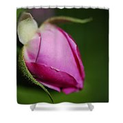 The Pink Rose Bud Shower Curtain