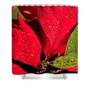 The Poinsettia Shower Curtain