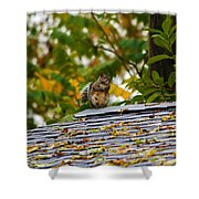 The Poser IIi Shower Curtain