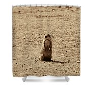 The Prairie Dog Shower Curtain