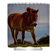 The Przewalski Horse Equus Przewalskii Shower Curtain