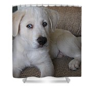 The Puppy Shower Curtain