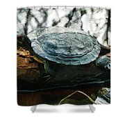 The Red Eared Slider Shower Curtain