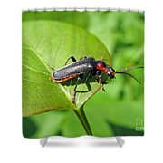 The Rednecked Bug- Close Up 2 Shower Curtain