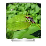 The Rednecked Bug On The Leaf Shower Curtain