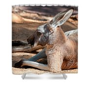 The Resting Roo Shower Curtain