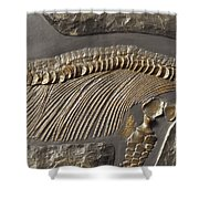 The Ribs And Spine Of Ichthyosaur Shower Curtain
