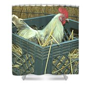 The Rooster That Laid A Golden Egg Shower Curtain