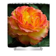 The Rose 2 Shower Curtain