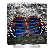 The Royal Blue Butterfly Shower Curtain