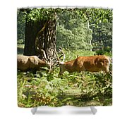The Rut Shower Curtain