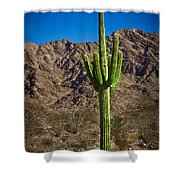 The Saguaro Shower Curtain by Robert Bales