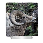 The Scent Of Danger Shower Curtain