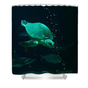 The Sea Turtle Dives Shower Curtain
