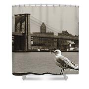 The Seagull Of The Brooklyn Bridge Shower Curtain