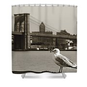 The Seagull Of The Brooklyn Bridge Shower Curtain