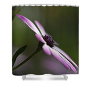 The Serenity Of Spring  Shower Curtain