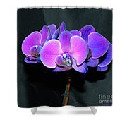 The Shade Of Orchids Shower Curtain