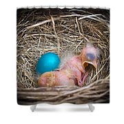 The Shimmering Blue Egg Shower Curtain
