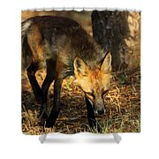 The Silent Approach Shower Curtain