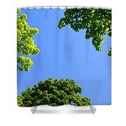 The Sky Through Trees Shower Curtain
