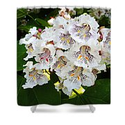 The Southern Catalpa Shower Curtain