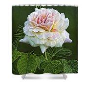 The Splendor Of The Rose Shower Curtain