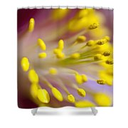 The Stamen Of A Flower Shower Curtain