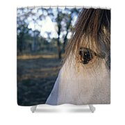 The Staring Eye Of A Clydesdale Horse Shower Curtain