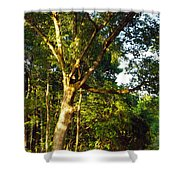 The Strong Tree Shower Curtain