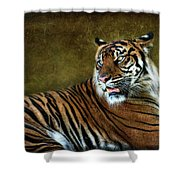 The Sumatran Tiger  Shower Curtain
