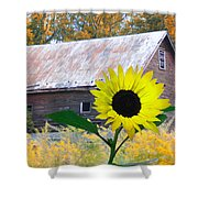 The Sunflower And The Barn Shower Curtain