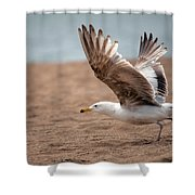 The Take Off Shower Curtain