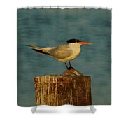 The Tern Shower Curtain by Ernie Echols