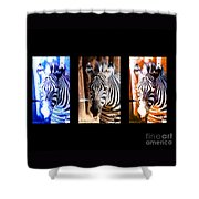 The Three Zebras Black Borders Shower Curtain by Rebecca Margraf