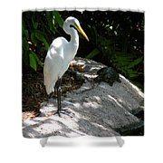 The Tortoise And The Heron Shower Curtain
