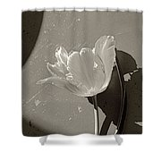 The Tulip And The Shadows Shower Curtain