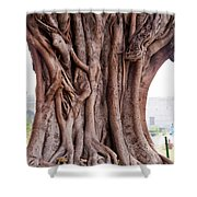 The Twisted And Gnarled Stump And Stem Of A Large Tree Inside The Qutub Minar Compound Shower Curtain