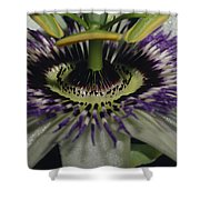 The Vivid Purple And Intricate Shower Curtain