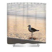 The Wave Recedes  Shower Curtain