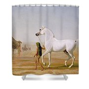 The Wellesley Grey Arabian Led Through The Desert Shower Curtain