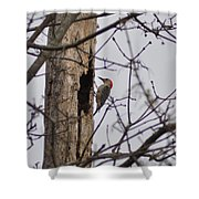 The Woodpecker Shower Curtain