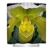 The Yellow Orchid Shower Curtain