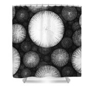 Theory Of The Universe Shower Curtain
