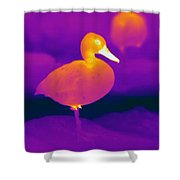 Thermogram Of A Cinnamon Teal Duck Shower Curtain